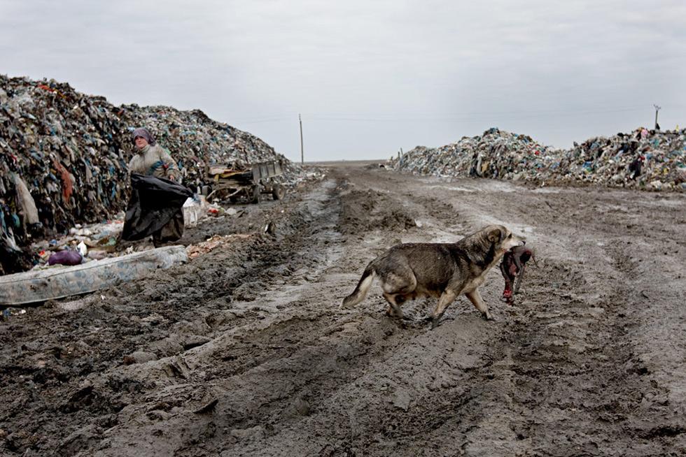 Pes na skládce nese mršinu