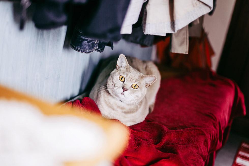 Kocour čeká na nevěstu