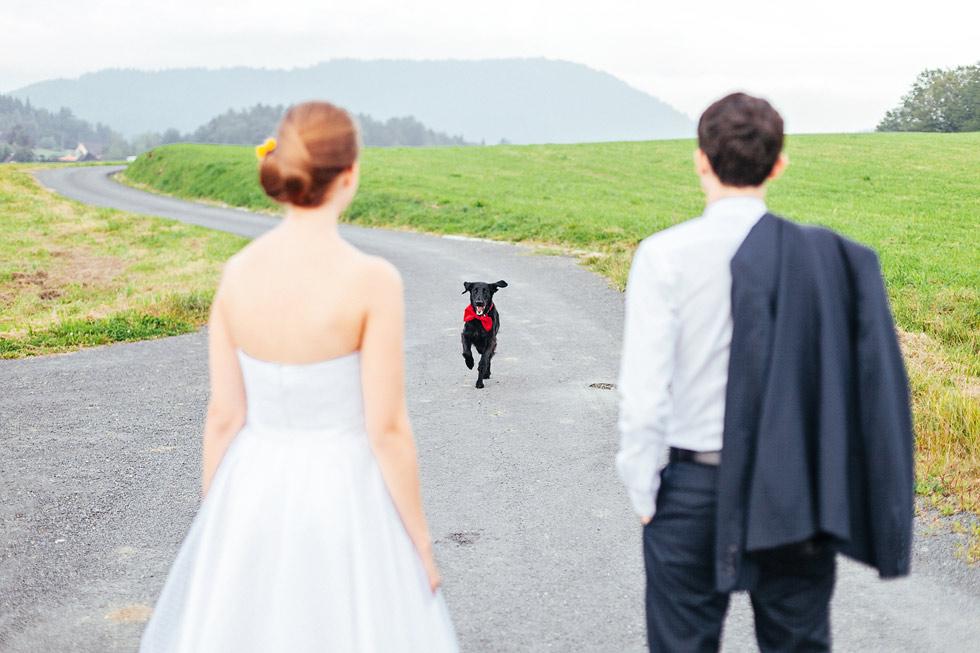 Svatební hafan utíká a běží