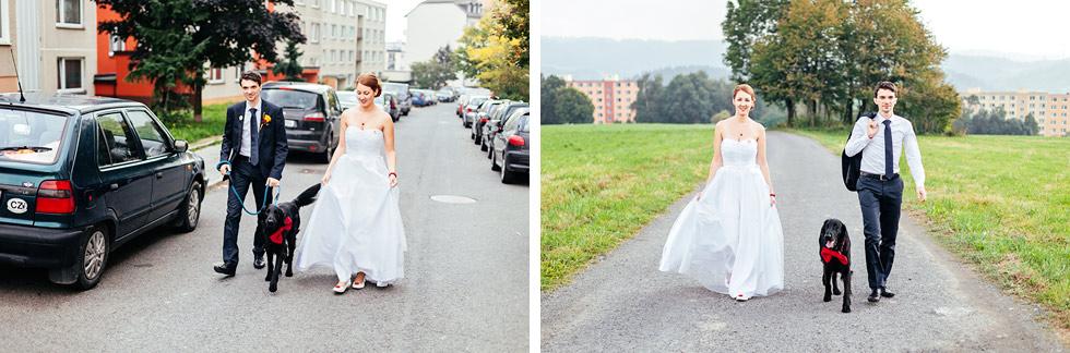 Venčení svatebního hafana
