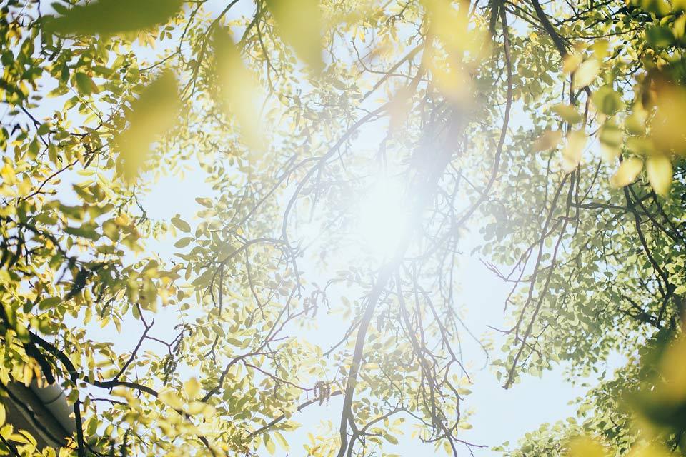 Romantická fotografie nádherného stromu