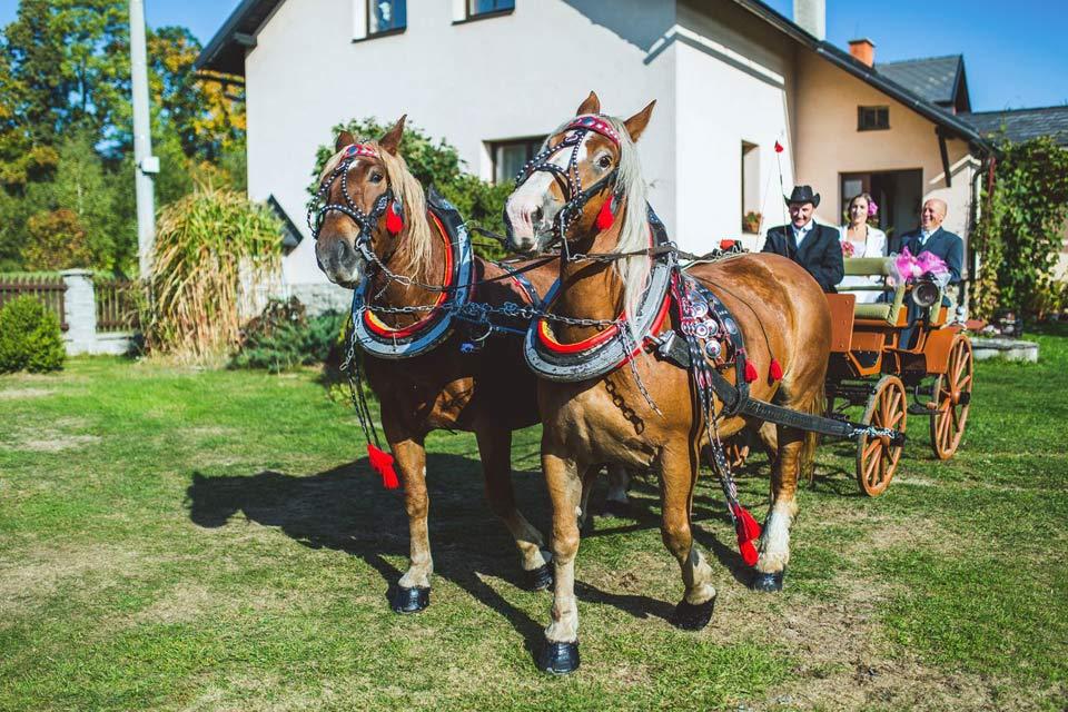 Nevěsta a koňské svatební spřežení