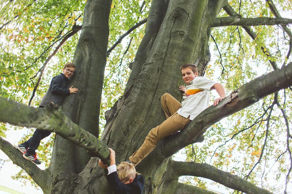 Svatební prolézání stromů
