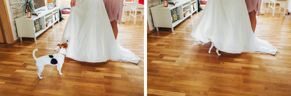 Pejsek se vydal na průzkum svatebních šatů