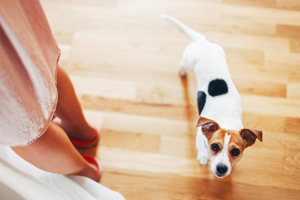 Svatební pejsek zkouší psí oči